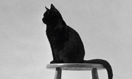 拍猫70年,收藏了90000张猫片,70年只拍猫咪,98岁老人他才是撸猫鼻祖!