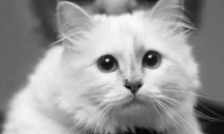 那只据说要继承老佛爷遗产的猫咪怎么样了?还是比我们有钱多了……